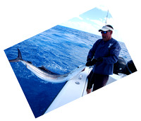 Sailfish Wrestling